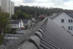 Vogelabwehr Dachfirst