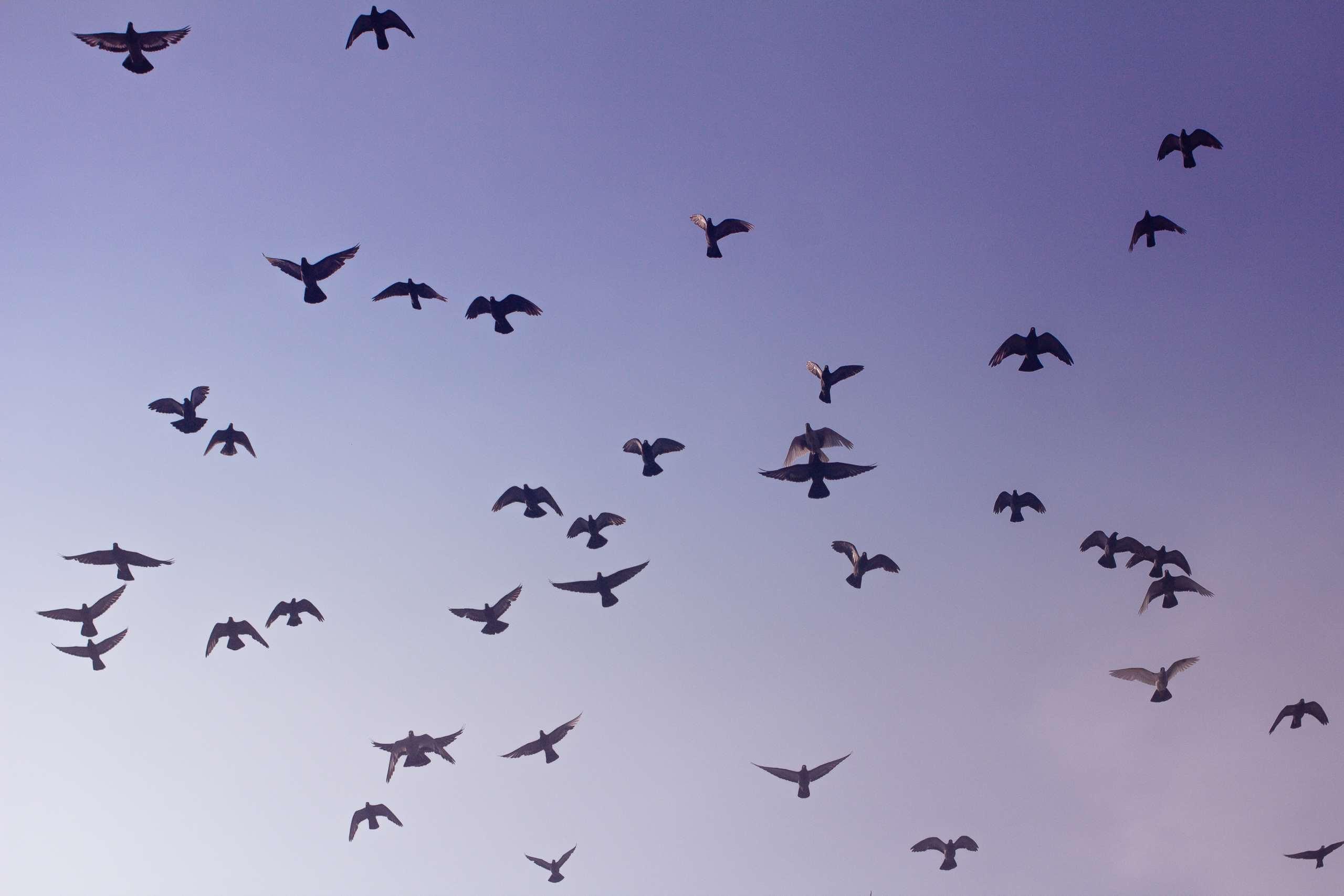 Wie werde ich Tauben los? Tipps zur Taubenabwehr