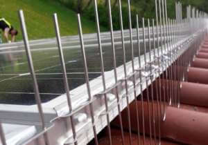 Taubenabwehr Photovoltaik
