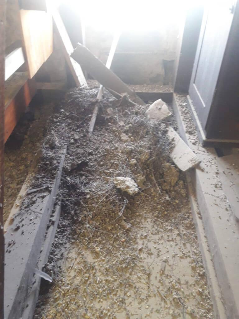 Eine leicht geöffnete Dachluke genügt aus um nach etlicher Zeit ein solches Chaos vor zu finden auf diesem Dachboden wurden gesamt 500 kg Taubenkot entsorgt